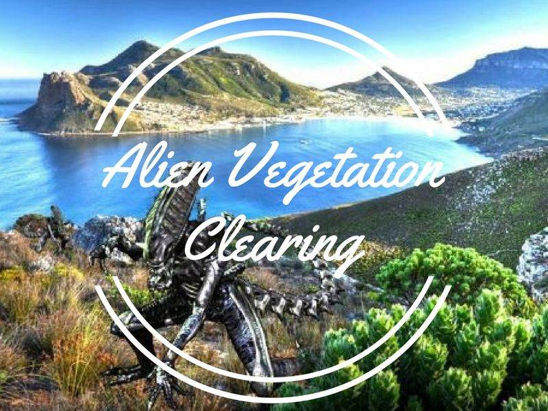 Alien Vegetation Clearing is Back